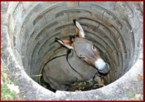 The Donkey in the Pit