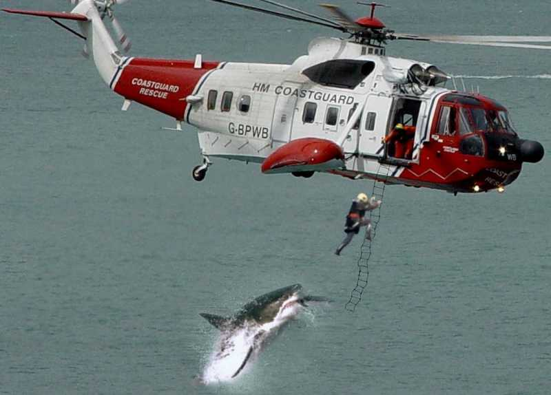 dangerous-shark-attack1.jpg