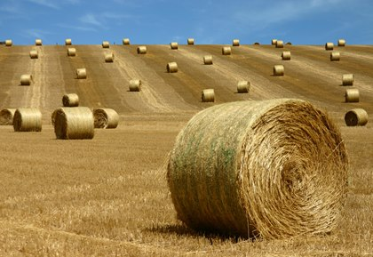 th-legacy-image-id-275-round-hay-bales-in-field.jpg