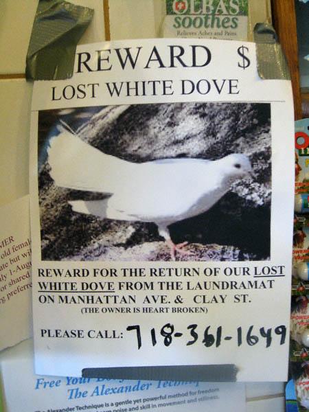 lost-dove3.jpg
