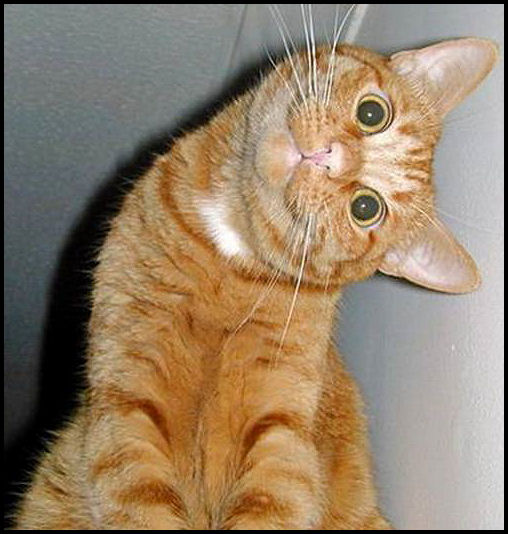sidewayscat.jpg