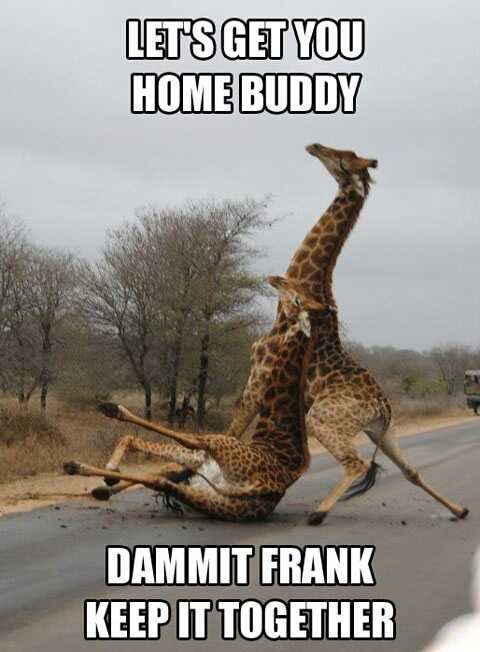 funny-giraffes-fighting-africa-1.jpg